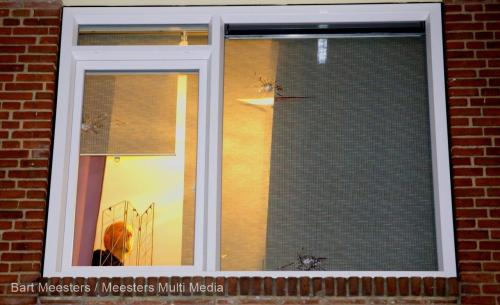 Woning bschoten Hdewychstraat 5