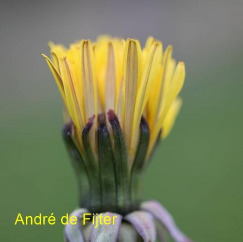 andre (1)