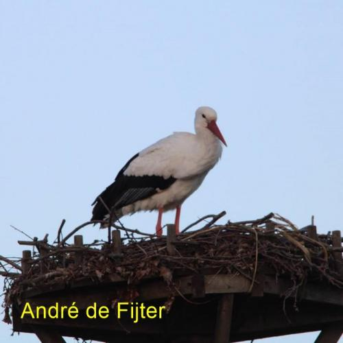 andre (2)